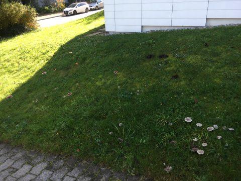 Pilze in der Siedlung