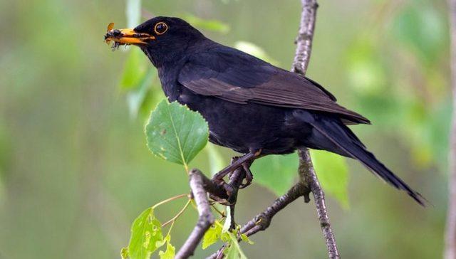 Birdlife/Michael Gerber
